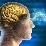 Human Brain and Consciousness
