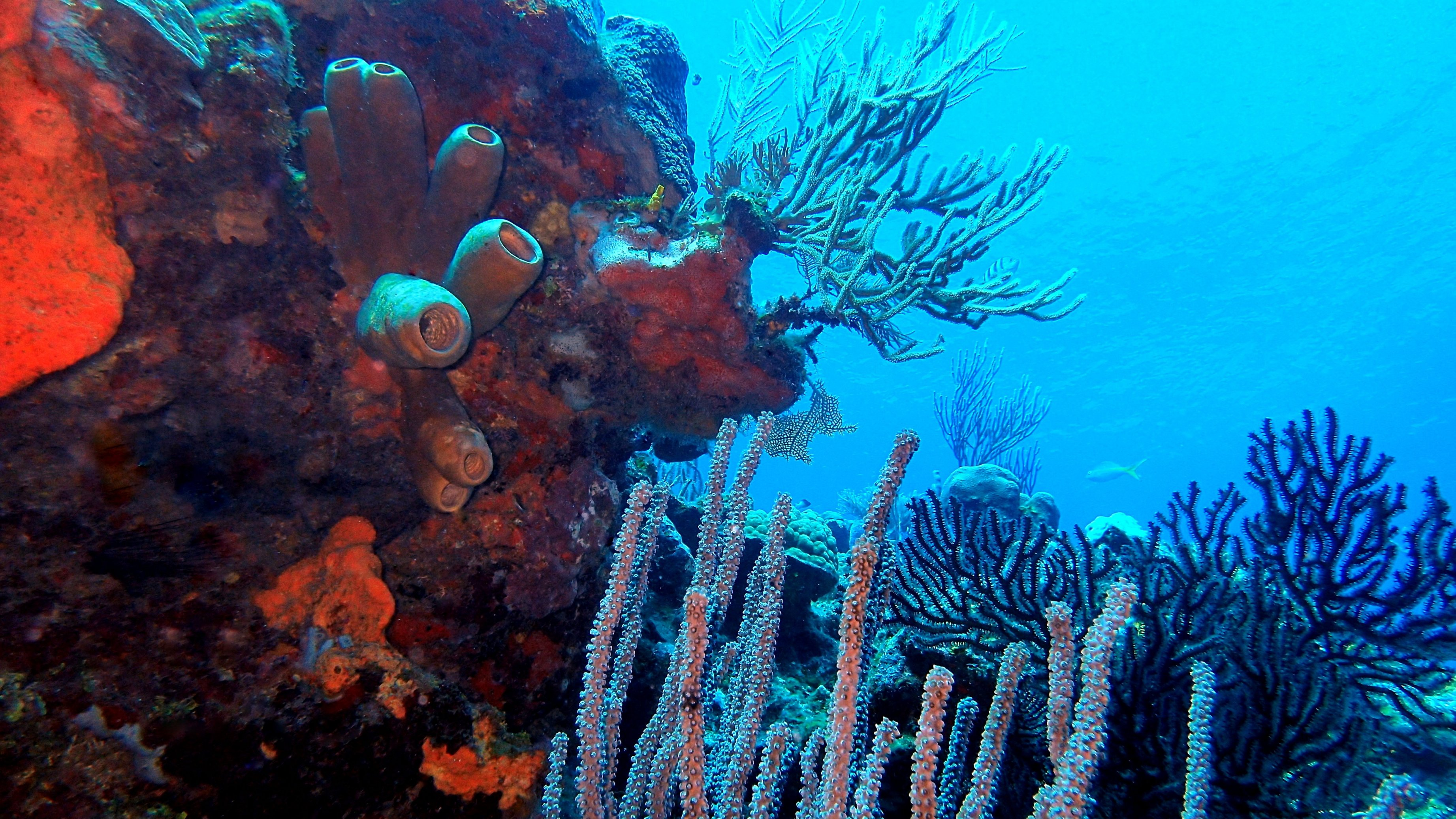 Top Scuba Dive Sites in Roatan