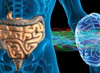 Second brain present in our body