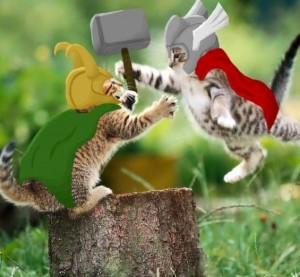 Thor and Loki Kittens