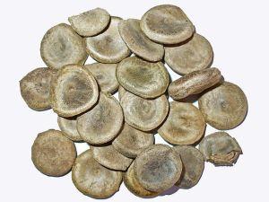 Quaker Buttons