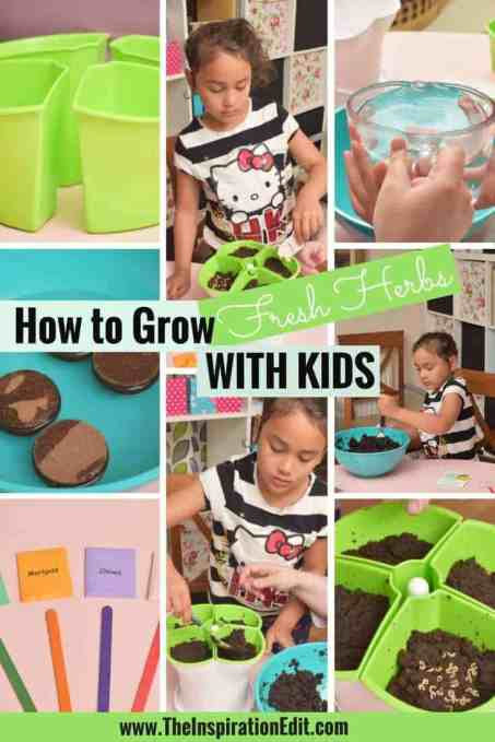 How To Grow Fresh Herbs With Kids