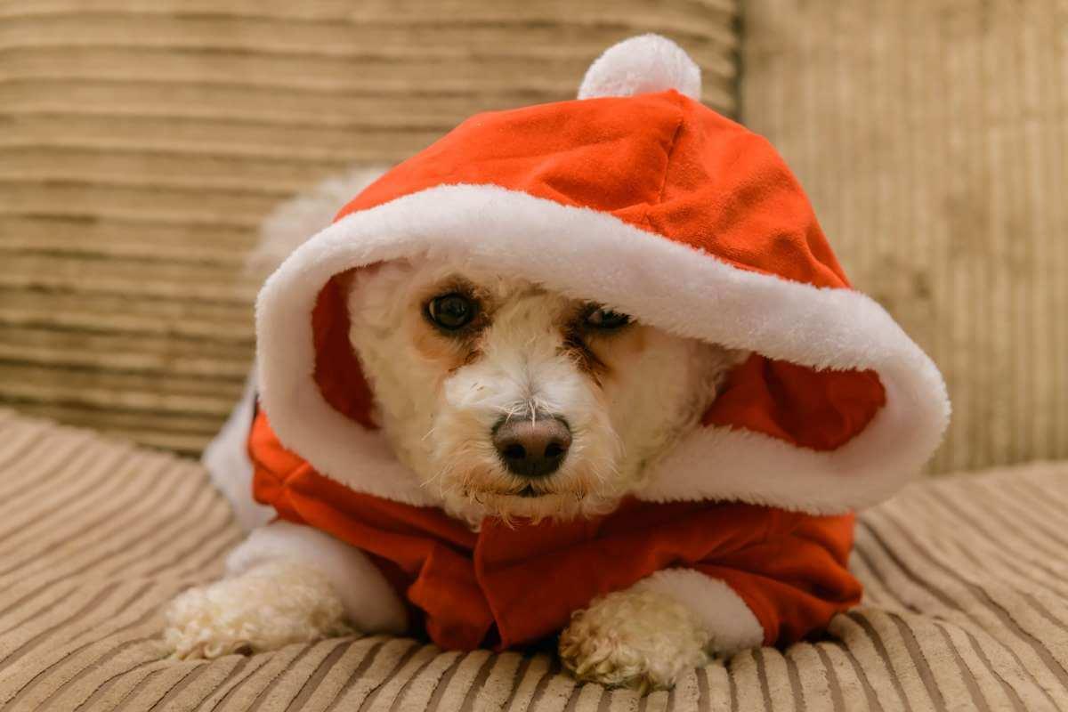 Dog Christmas Santa