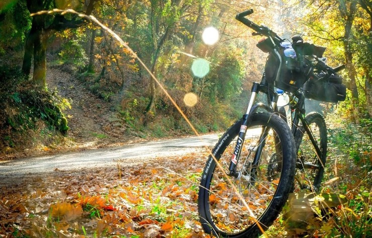 Cycling Is Good for Your Health