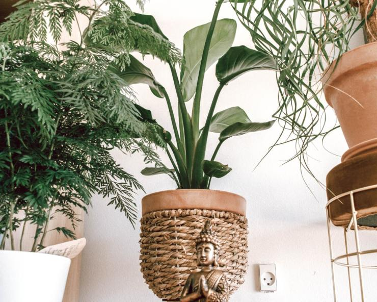 Bring Nature In - home feel good