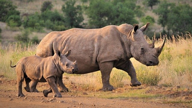 african safari -10 Future Trips You Can Start Planning Now