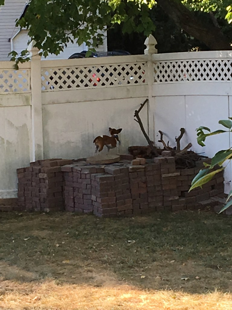 A four foot tall pile of bricks to keep my dog from climbing the wood pile, with my dog standing on top of it.