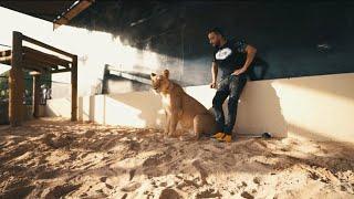 LACRIM – Freestyle Tiguere 2 (English lyrics)