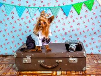 dog on suitcase