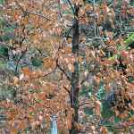 The Clootie Tree at Tobernalt - The Irish Place