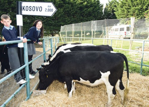 Prisoners' cattle charity work