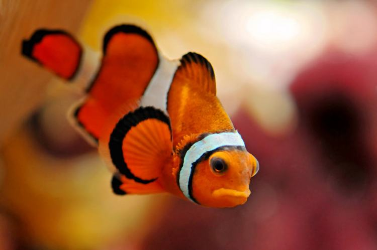 «Don't call me nemo!»
