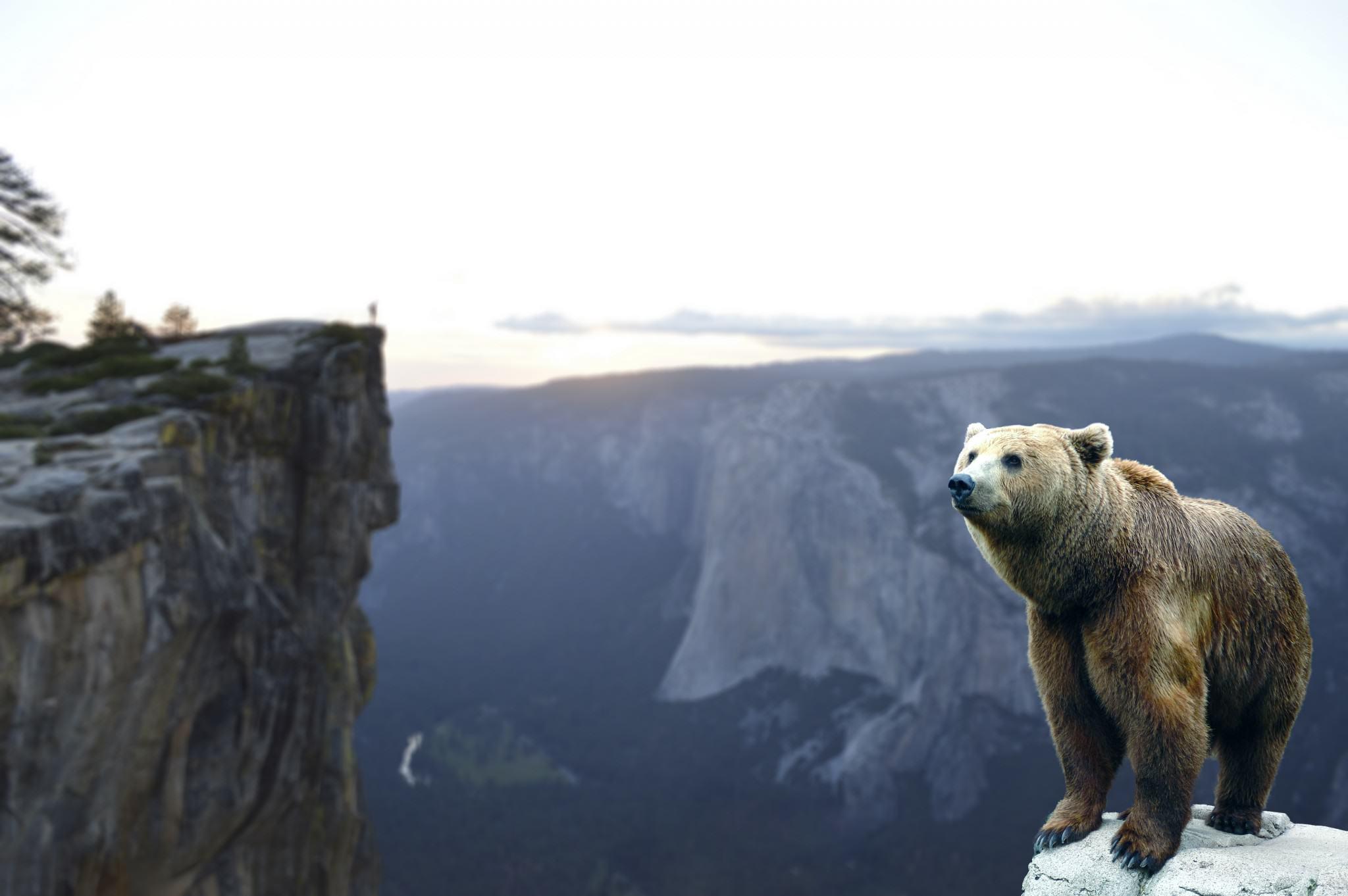 bear-1494996