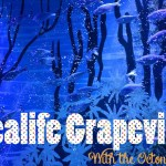 Our Day at Sealife Grapevine with the Octonauts