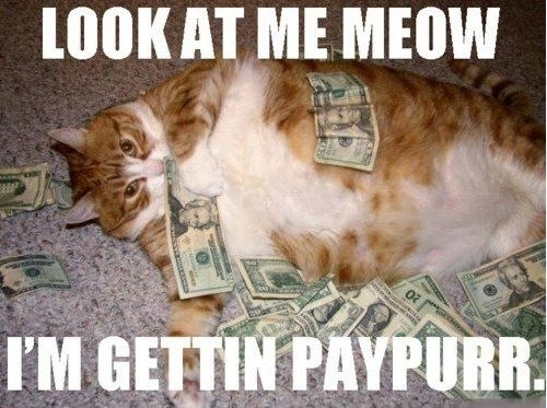 funny-look-me-meow-rapper-gangster-fat-cat-money-paper-paypurr-pics