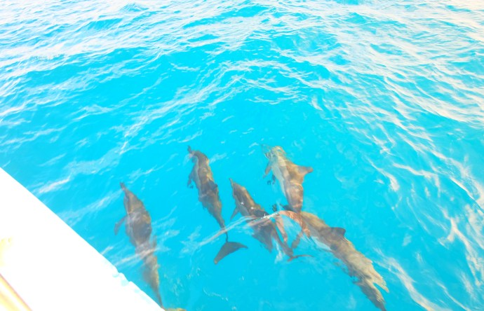 Dolphin cruise at Shangri-La's Villingili Resort & Spa