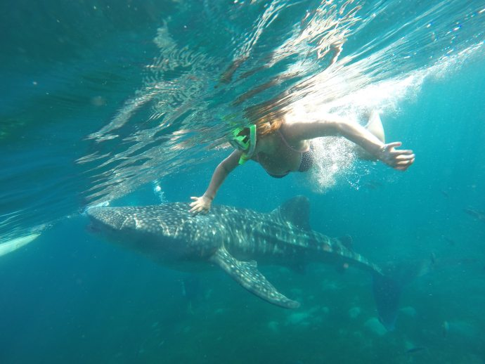 Swimming with Whale Sharks in Philippines