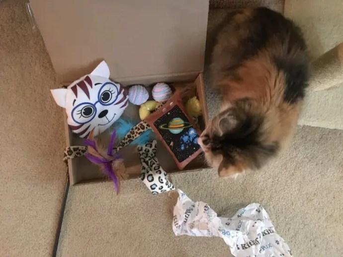 Lina with Kitnipbox November 2016 Contents