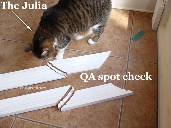 cute cat inspecting mdf door trim