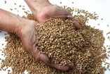 Properties of Wheat for Health