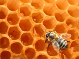 Learn the benefits of Propolis
