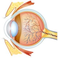 Glaucoma: Causes and Natural Treatment