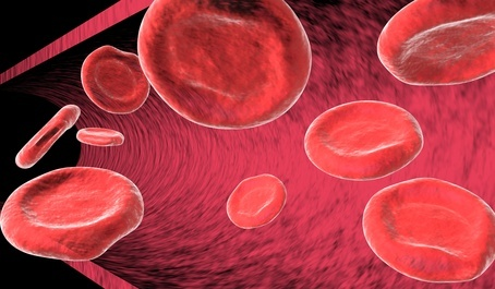 Blood cells in artery