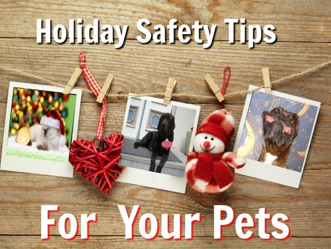 Holidays with pets we love need to be safe for both pets and guests