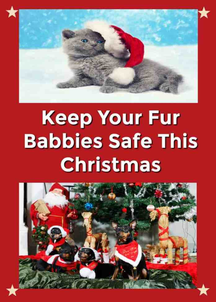 Keep Your Pets Safe This Holiday Season