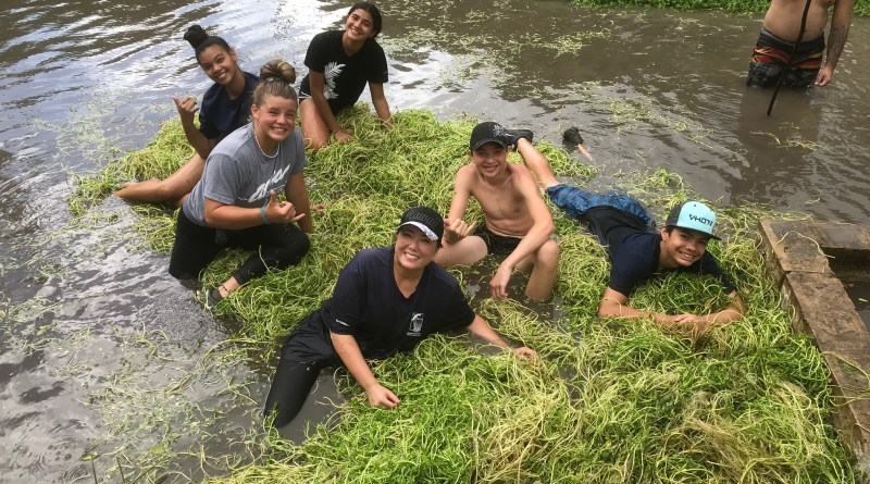 Want to get down and dirty? Join the Lo'i Kalo crew on Saturday.