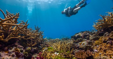 Coral Reefs to disappear by 2100