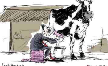 Kashmir, cow business in kashmir, kashmiri cow, kashmir milk industry,