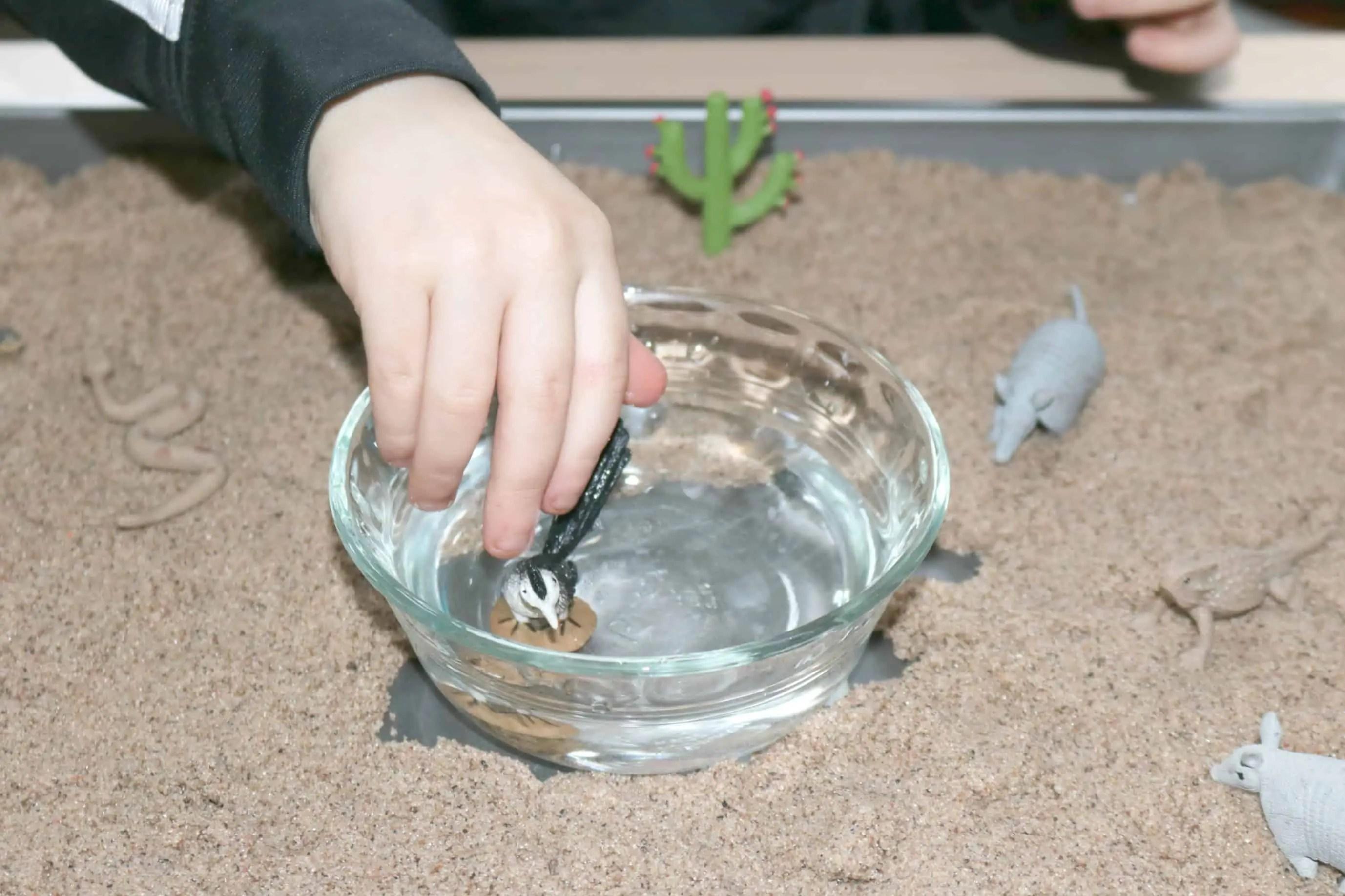 Preschool Desert Sensory Activity 2