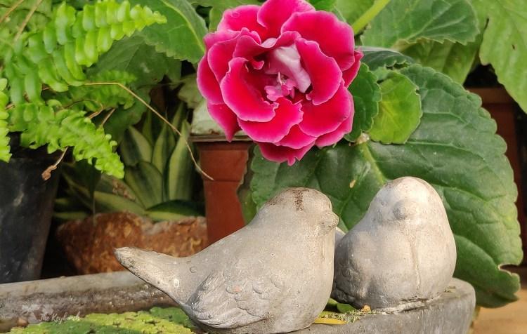 Jayashree Rajan's garden apartment tour on The Keybunch: a pair of bird sculpture in garden