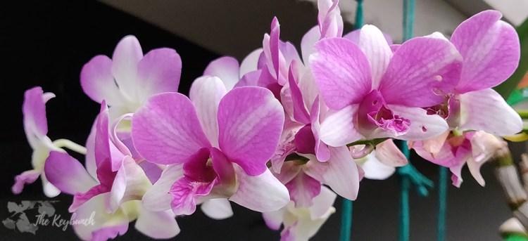 Jayashree Rajan's garden apartment tour on The Keybunch: orchid flower bloom in garden