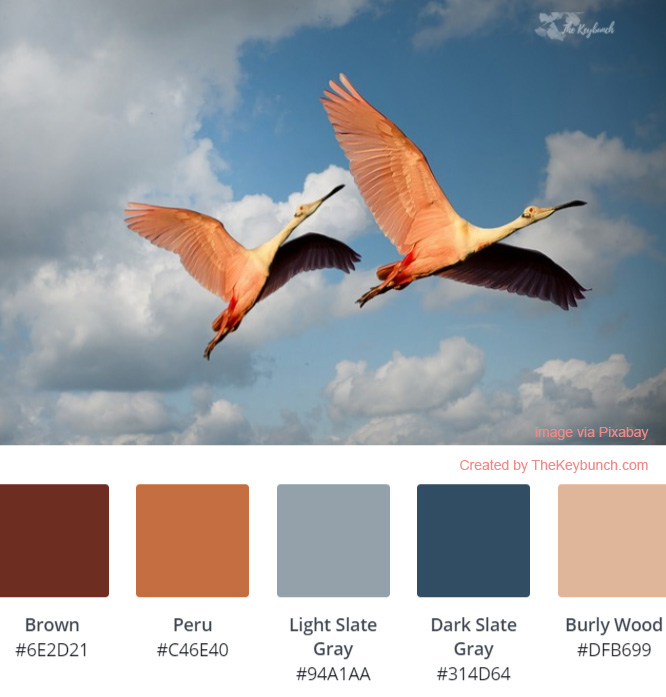 A living coral sunset color palette