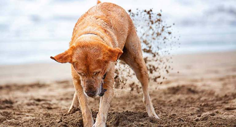 Dogs and Digging