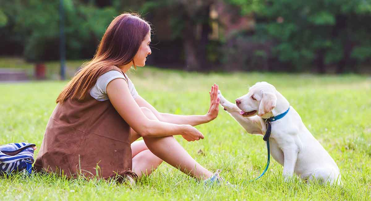 4 Tips To Train Your Dog