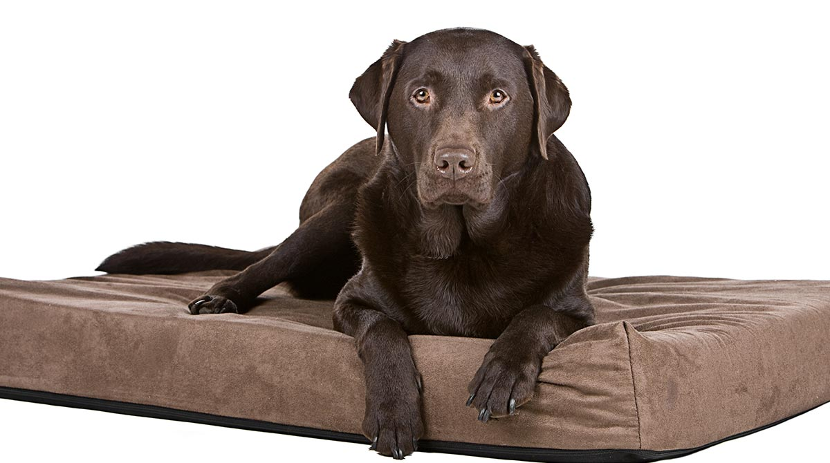 Our Favorite Big Dog Beds Perfect For Labs And Other