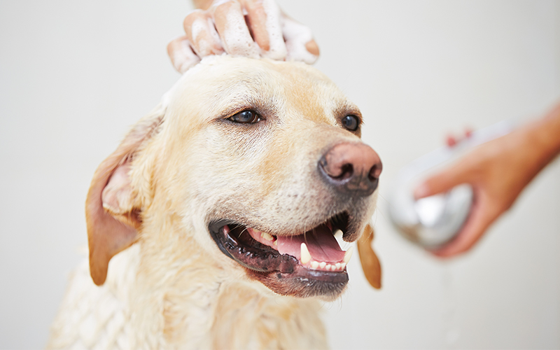 your dog to get nervous when it comes to bath time