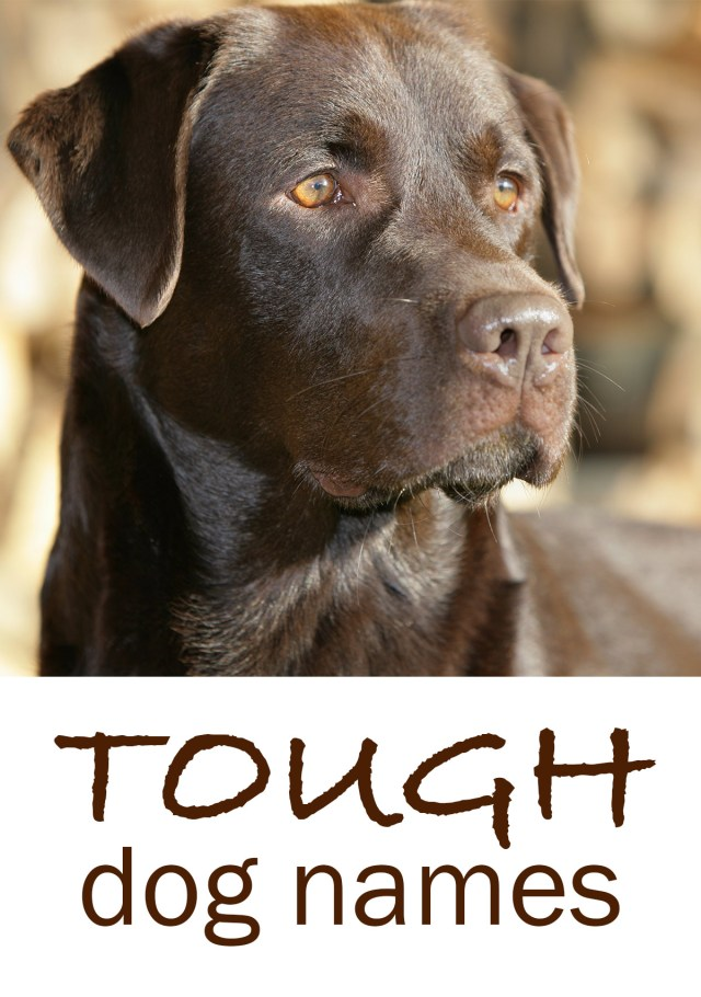 tough dog names - scary, fierce, strong, guard dog inspired ideas