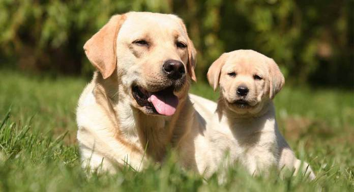 Introducing A Puppy To An Older Dog – Getting Off On The Right Paw