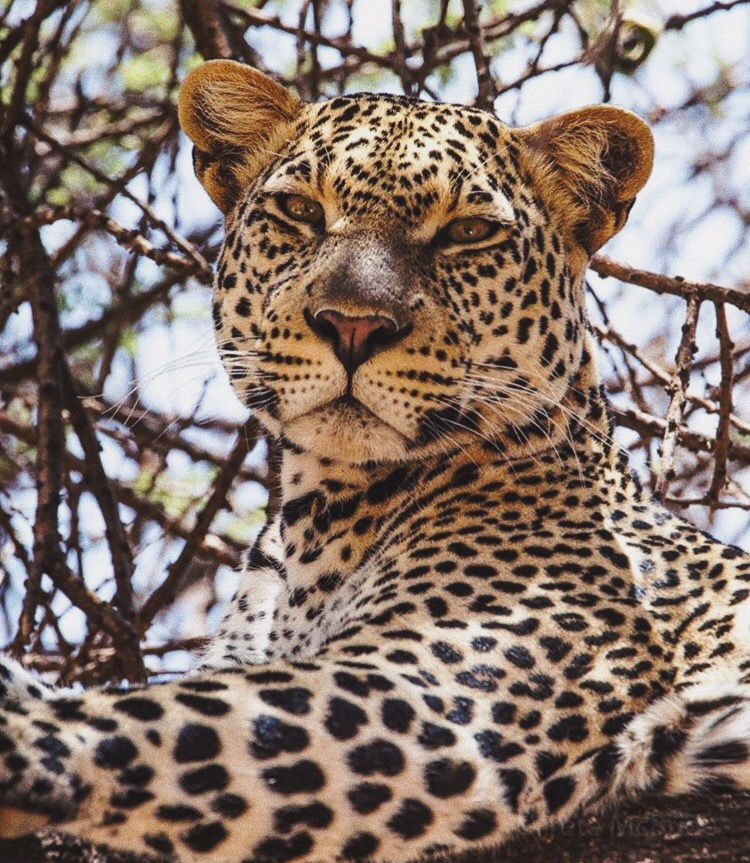 Make Today Amazing | Leopard Letters August 2017 | The Lady-like Leopard by Melina Morry | Photo: National Geographic