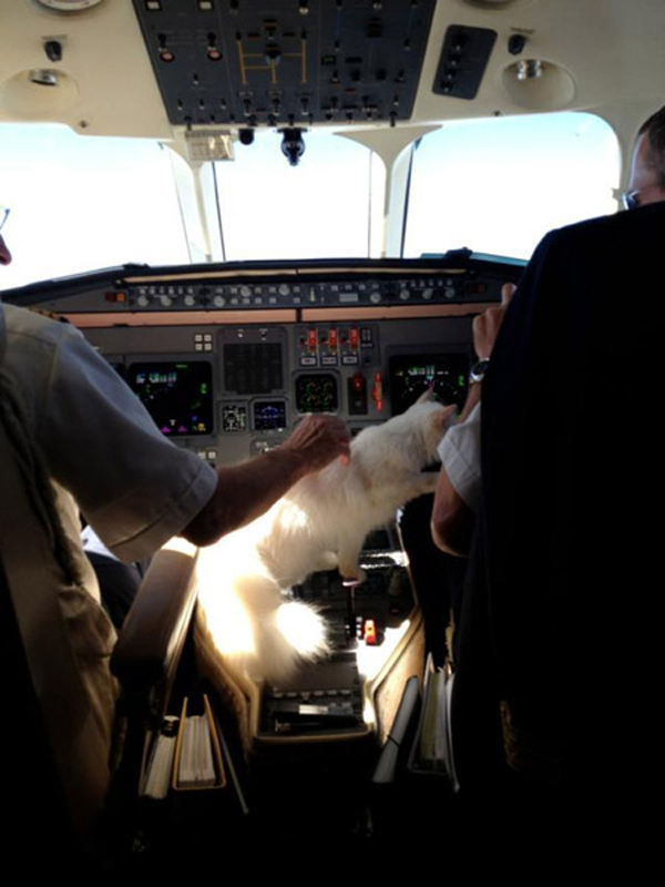 Choupette plays in the cockpit