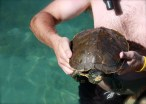 Kevin Jackson with the momma turtle | www.thelandrovers.com