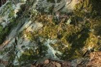 mossy wood & rocks