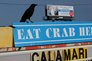 Eat crab_The Landrovers