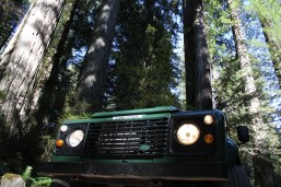 IMG_2599 northern California, The Redwoods, 1984 land rover defender