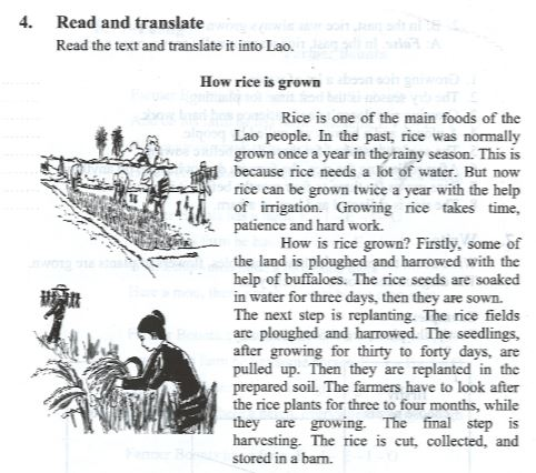 How rice is grown