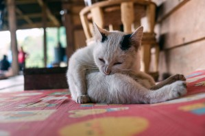 Cat at the camp